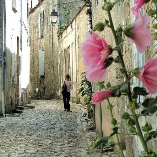 Randonnée à vélo en Charente, Pays du Cognac