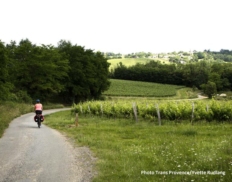 Bordeaux great wines bike tour - Cycling along the Chateau Lafite Rothschild in Pauillac vineyard