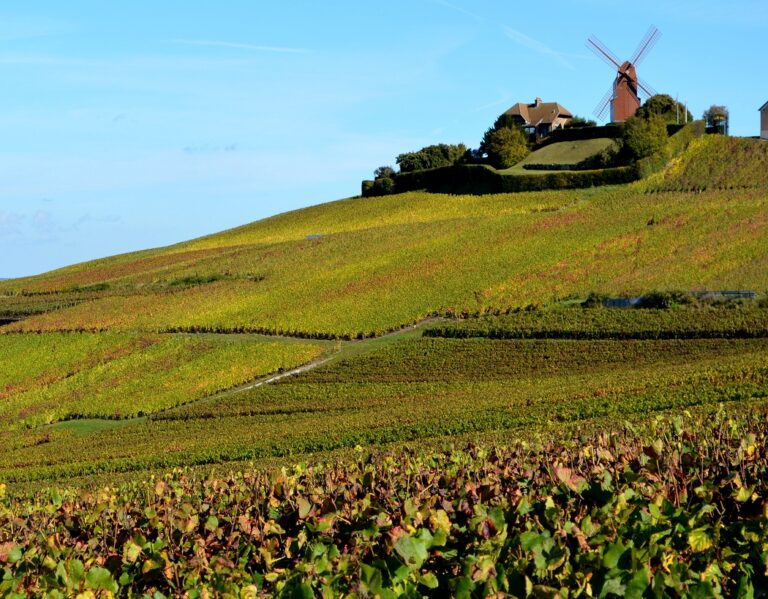 The vineyards of Cognac by bike with really good wines