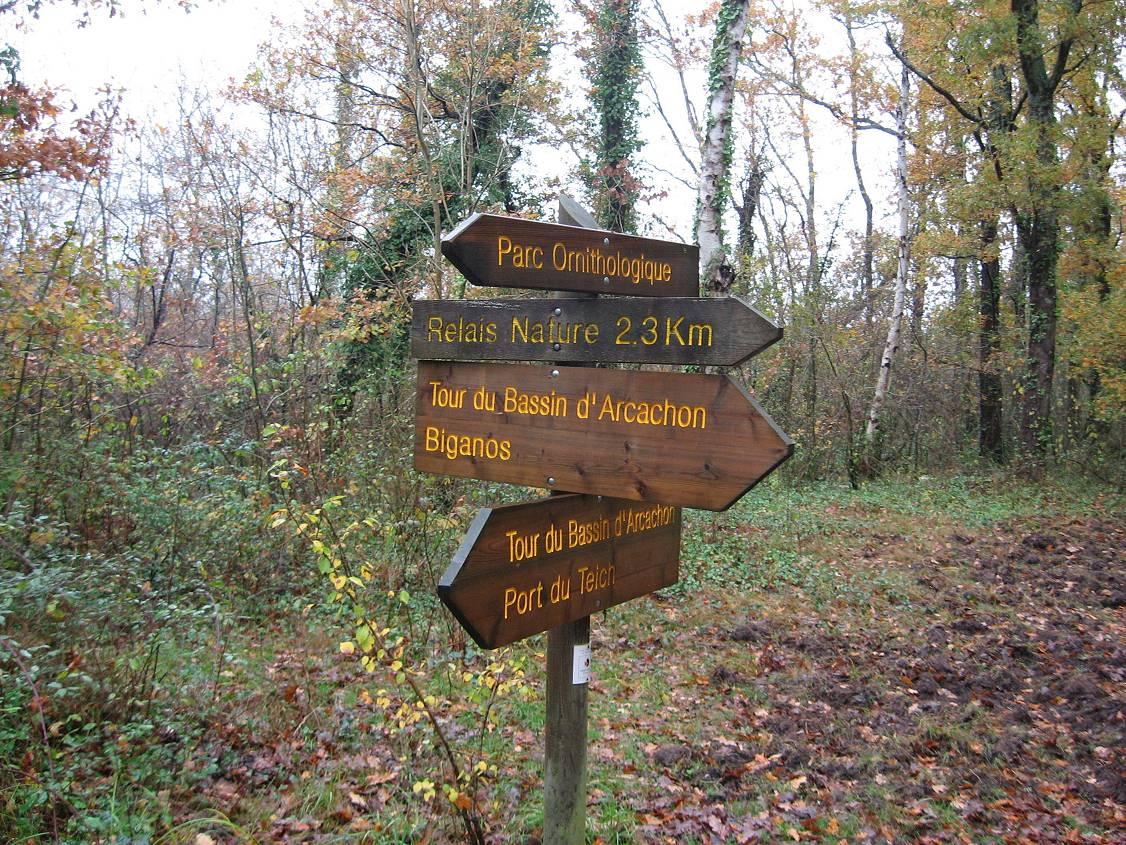 Marche nordique autour du Bassin d'Arcachon