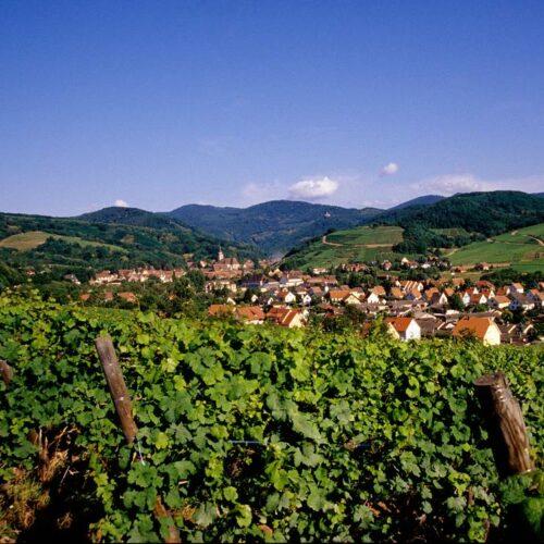 Randonnée à vélo des vins d'Alsace. Célèbre route des vins !