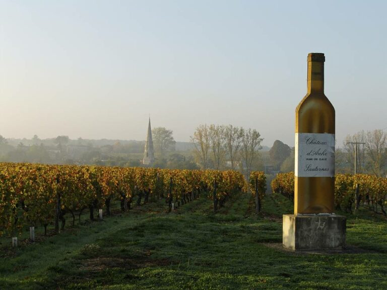 winery visit and wine tasting in Bordeaux vineyards