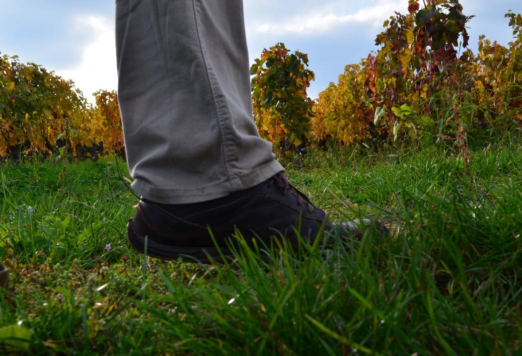 Randonnée pédestre en Bourgogne et ses célèbres vignobles